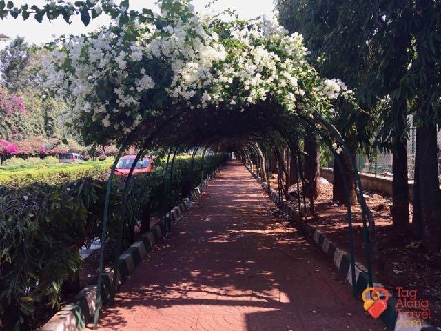 Bangalore Running & Walking Tours- flower canopy