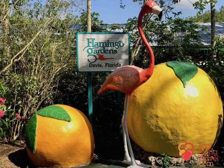 Review escape to nature at flamingo gardens fort launderdale - Flamingo gardens fort lauderdale ...